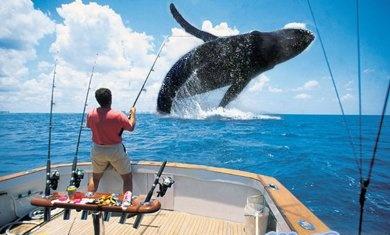 memancing ikan paus