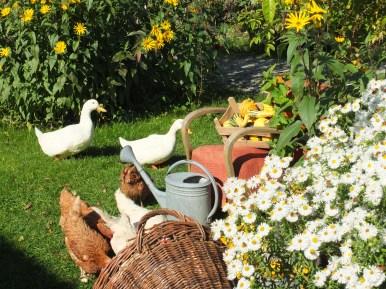 Unsere Hühner und Enten