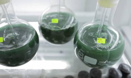 Biodiesel de algas en Chile