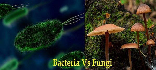 Difference Between Bacteria and Fungi (with Comparison Chart) - Bio