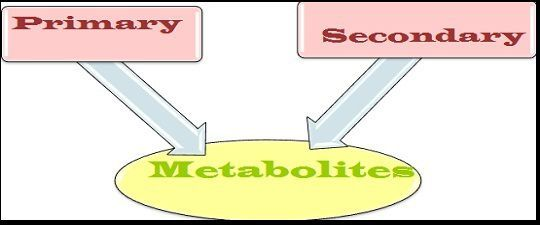 Difference Between Primary Metabolites and Secondary Metabolites