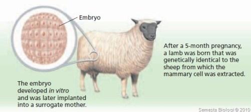 teknologi kloning domba dolly