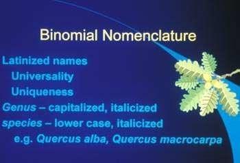 binomial_nomenklatur