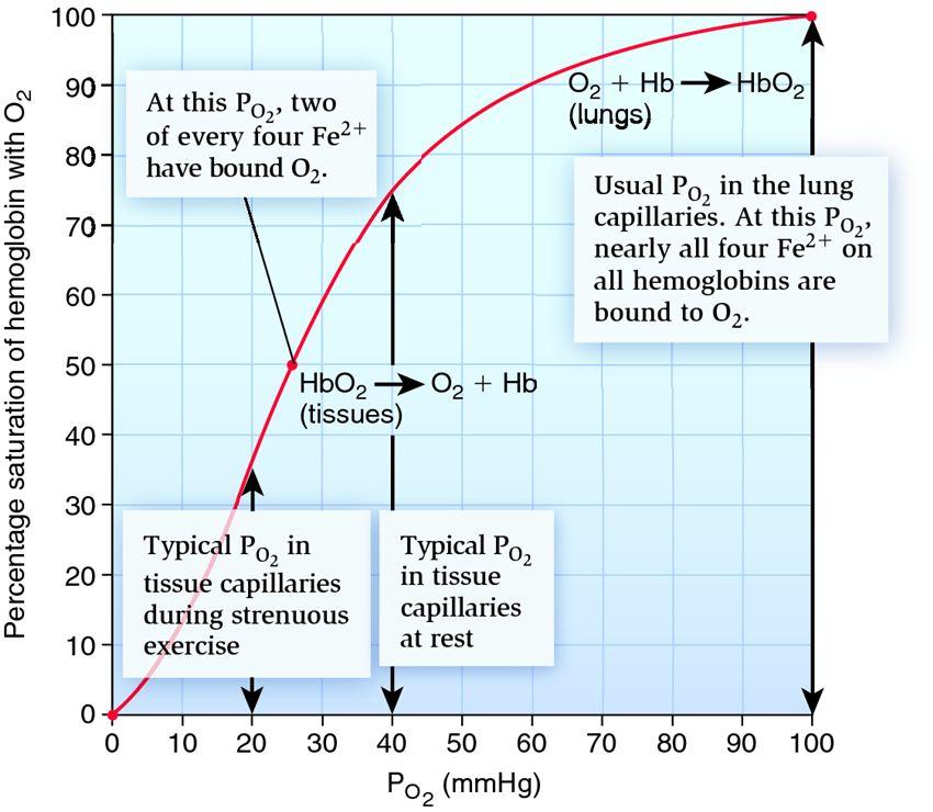Oxygen Oxygen Dissociation Curve
