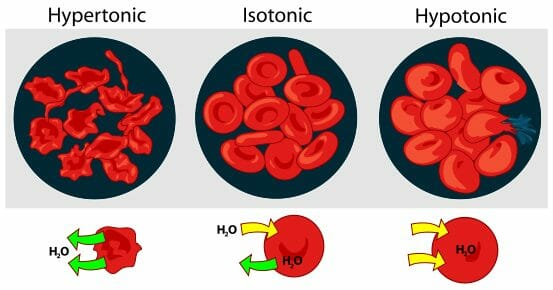 What Happens to a Cell in a Hypertonic Solution Biology Dictionary
