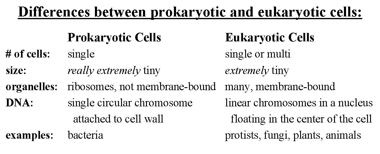Module 3 Kingdom Protista Honors Biology - protista examples