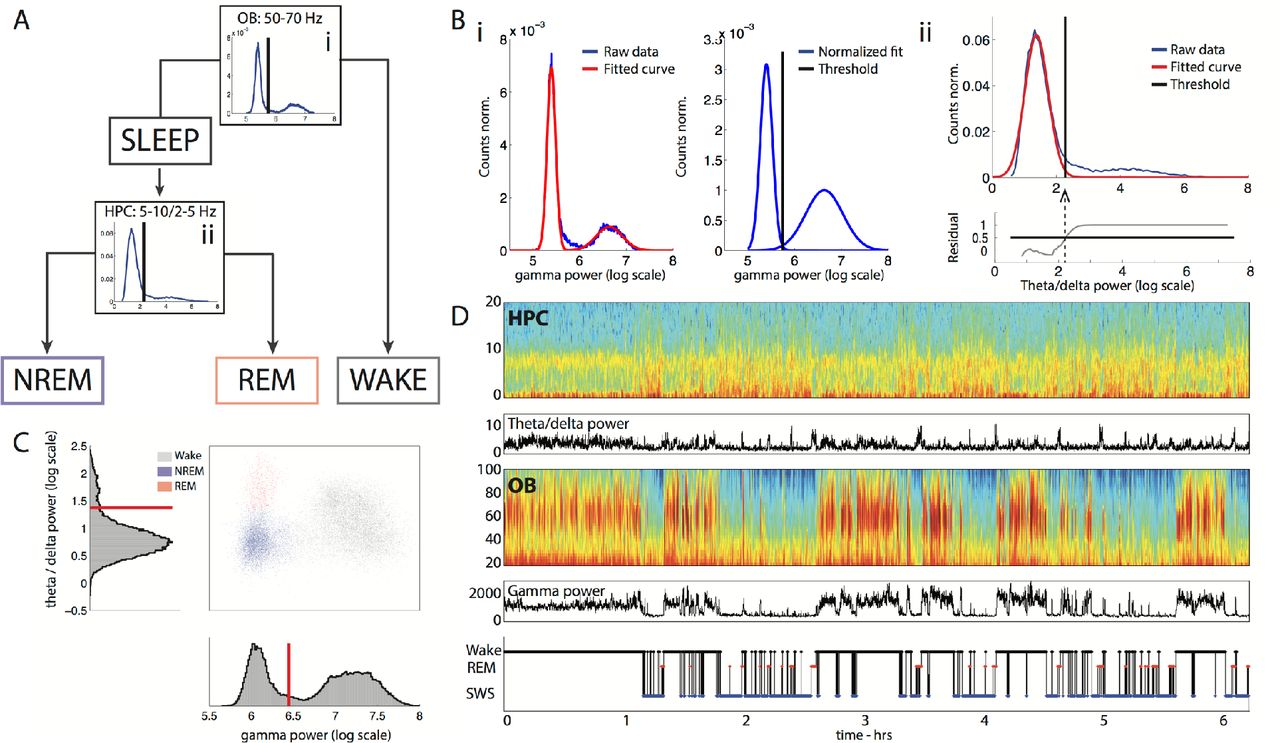 Fitting Lamp Gamma Harnessing Olfactory Bulb Oscillations To Perform Fully Brain