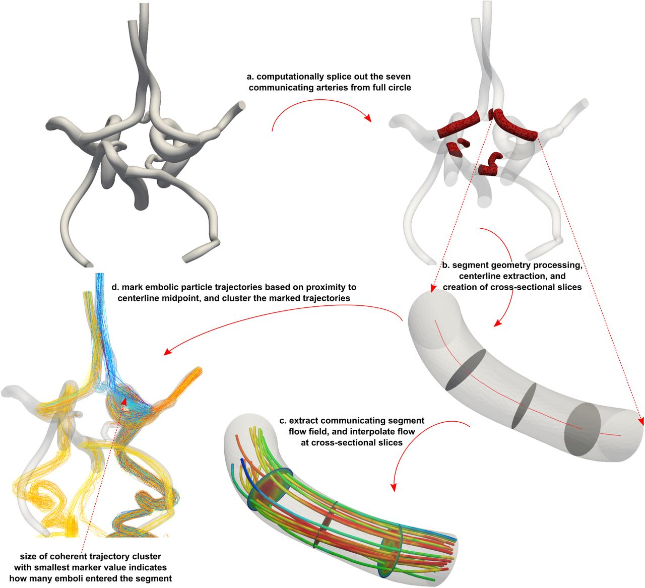 The Role Of Circle Of Willis Anatomy Variations In Cardio Embolic Stroke A Patient Specific Simulation Based Study Biorxiv