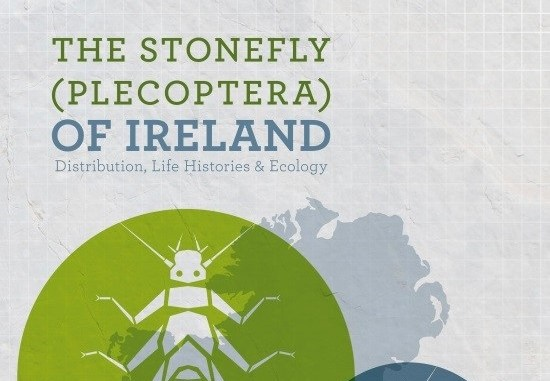 Stonefly1featured