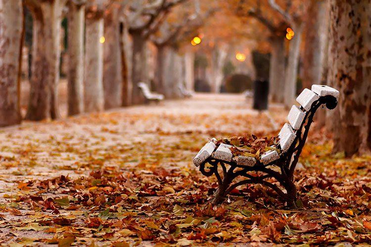 Fall Of The Autumn Hd Wallpaper Картинки красивая осень 36 фото Прикольные картинки и юмор