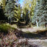 One of the hiking trails at Birchwood Camp