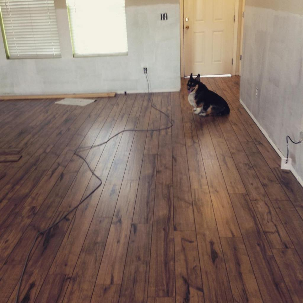 Piper loves the new floors