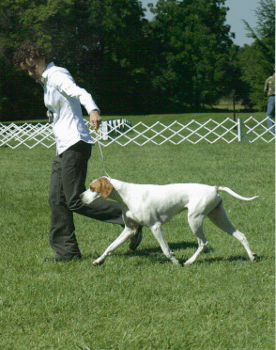 Pointer Brett showing off her moves at the 2007 APC National.