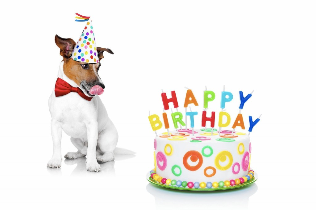 Pink Animal Print Wallpaper 23 Dog Birthday Party Ideas That You Must Take Away