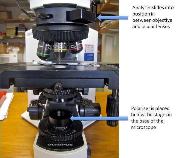 What You Ought To Know About Polarising Light Microscopy - Bitesize Bio