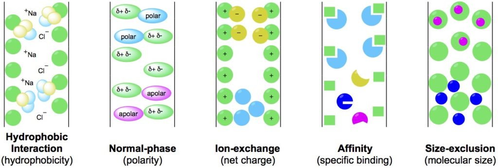 How Separation Works in Column Chromatography Methods - Bitesize Bio - cation exchange chromatography