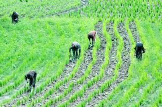 rice_agriculture_nigeria-1024x681