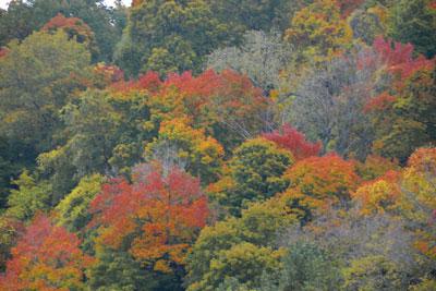 017_autumn2.jpg