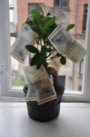 Pengetræet hjemme i min vindueskarm.