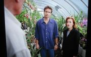 Mulder & Scully, surrounded by orchids