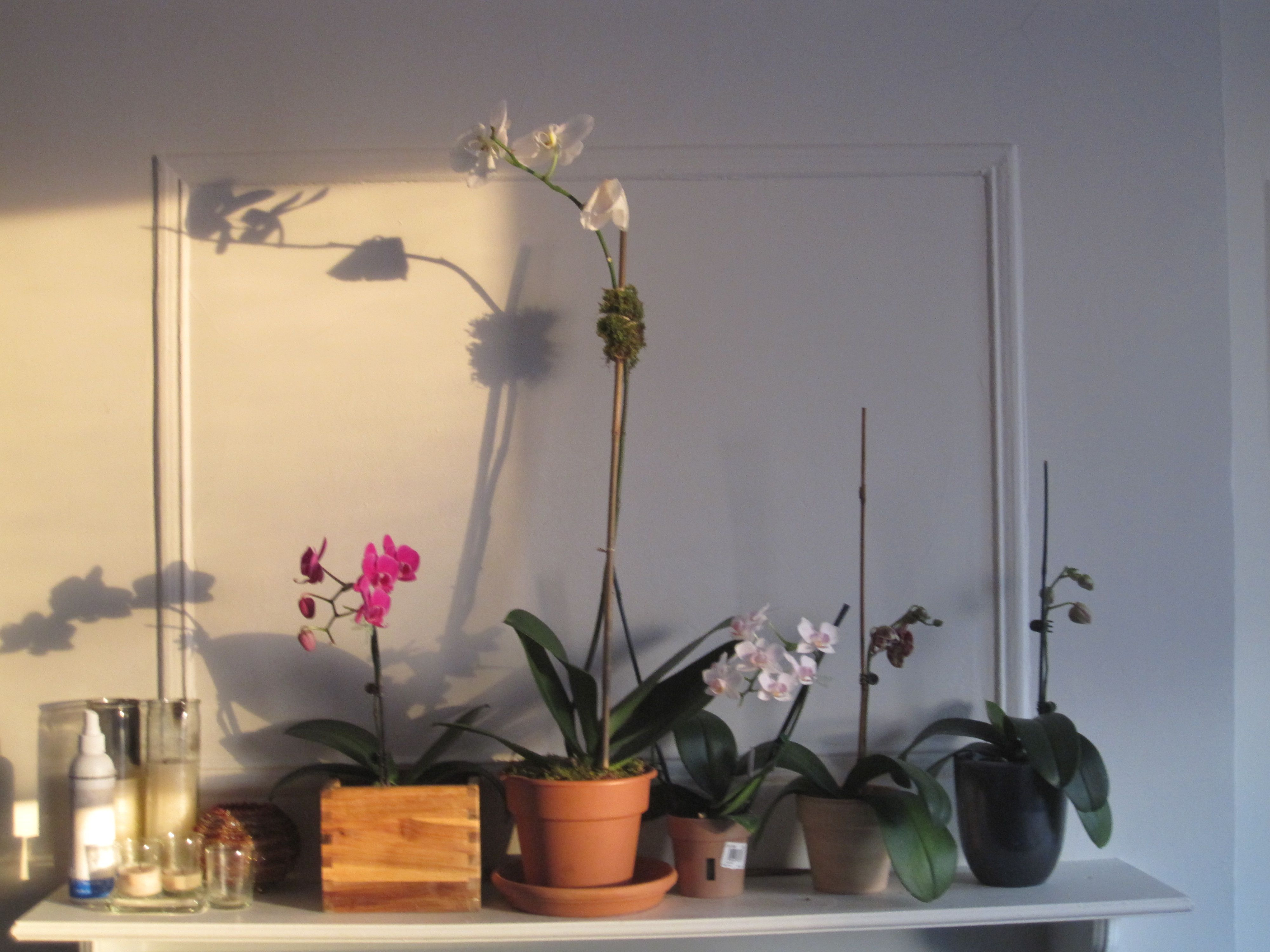 how to take care of orchids after blooming