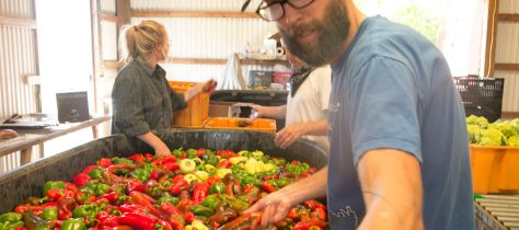 farm workers washing peppers to add to the weekly CSA box
