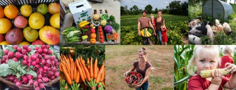Blackbook Farm Family farmers grow organic produce for CSA shares and wholesale.