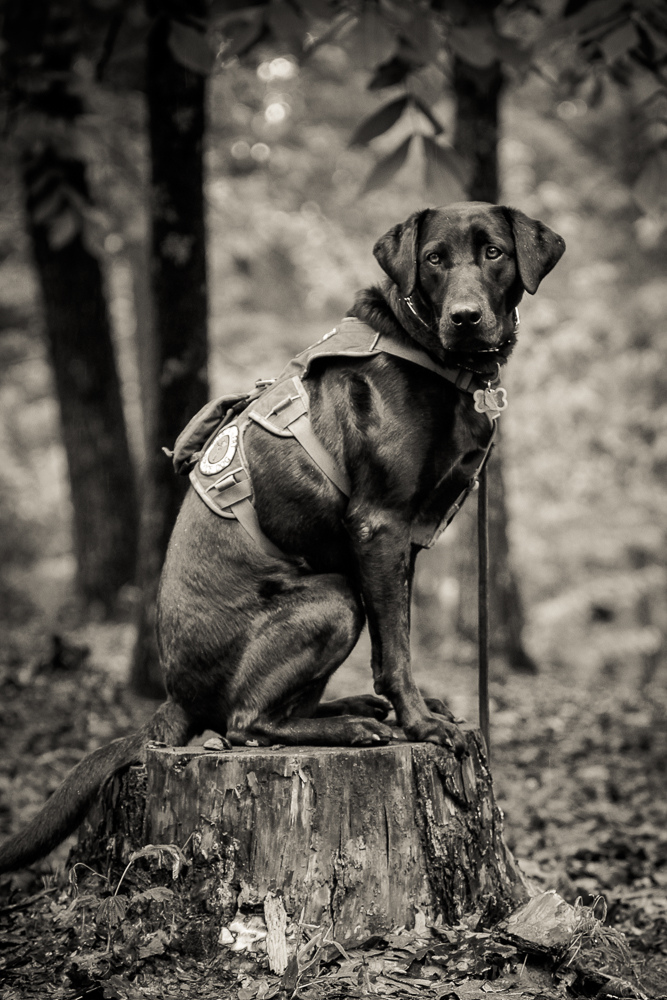 What Does Training A Service Dog Entail