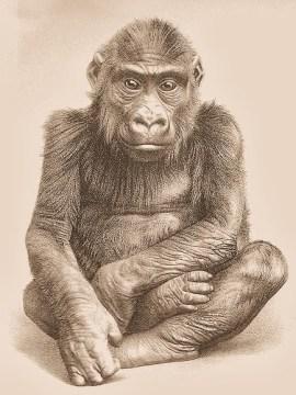 Gorilla_Boy_M'Pungu
