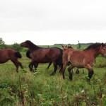 車で疾っていたら馬の群れが目に入った