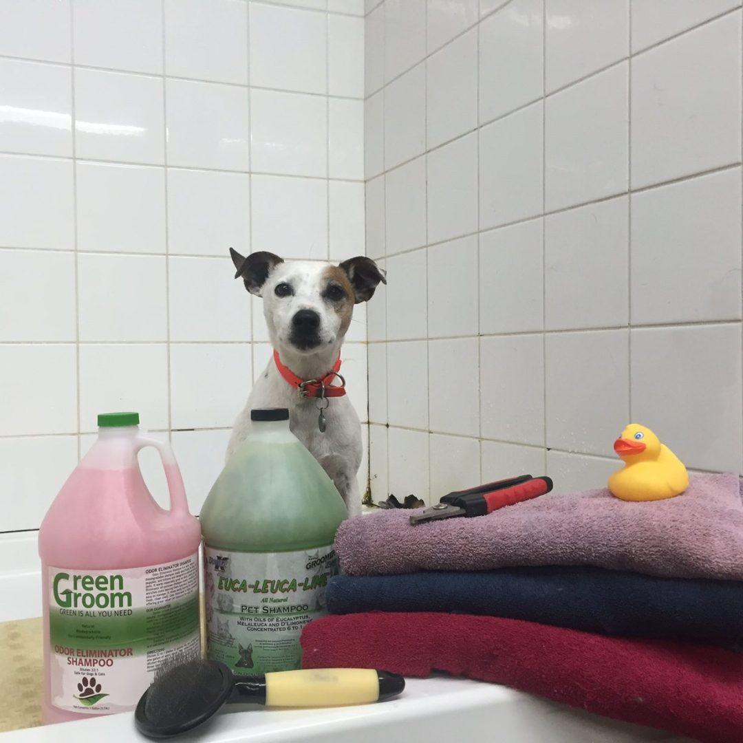 Dog Bathing Pool