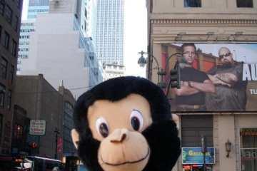 moshe monkey