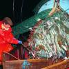 Although 75 percent of the world's fisheries are now either overexploited, fully exploited, significantly depleted or recovering from overexploitation, many governments continue to provide huge subsidies -- about $20 billion annually --­ to their fishing sectors. Pictured: A fisherman hauls in a catch in the North Sea. (Thinkstock)