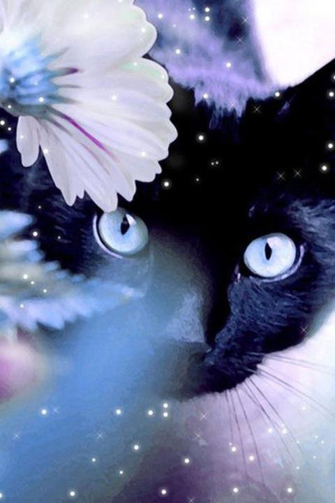 Black And White Diamond Wallpaper Black Cat White Flowers Blau Stern Schwarz Schlonge