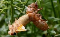 Edible Bugs