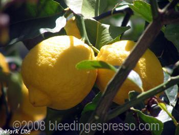 Limoni love on Flickr