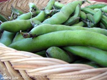 Fava beans on Flickr