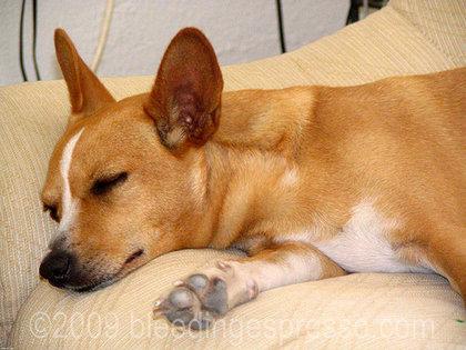 Sleeping Stella on Flickr
