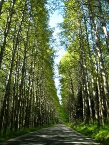 A road through the Aspromonte