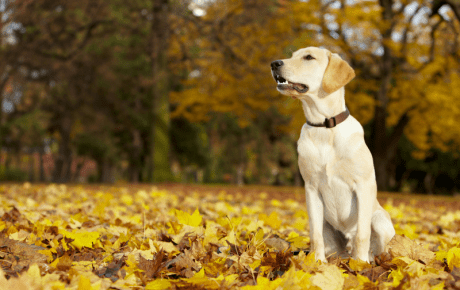 "Grandfathers & Guide Dogs:  Adding ""4"" Paws to the Family"