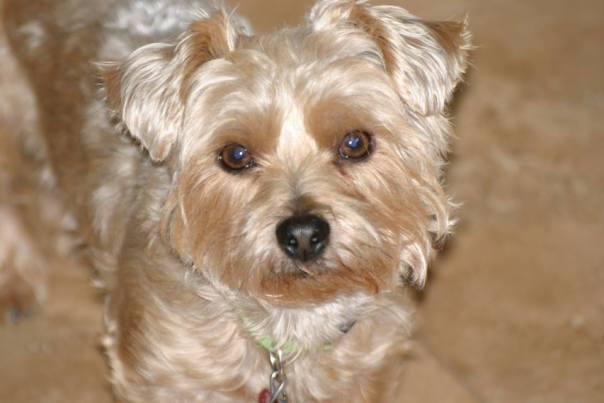 Jonesie, beloved pet of the Bliss aka Hamilton family
