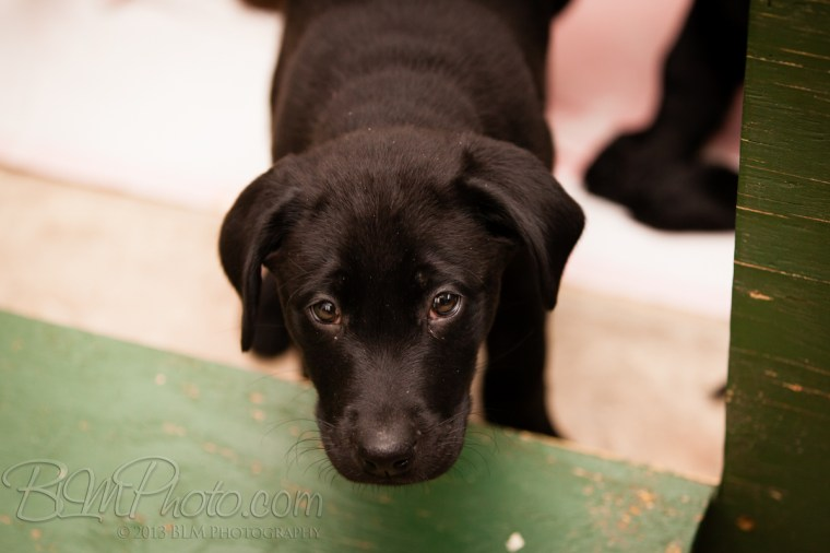 Webber-Dogs-5267