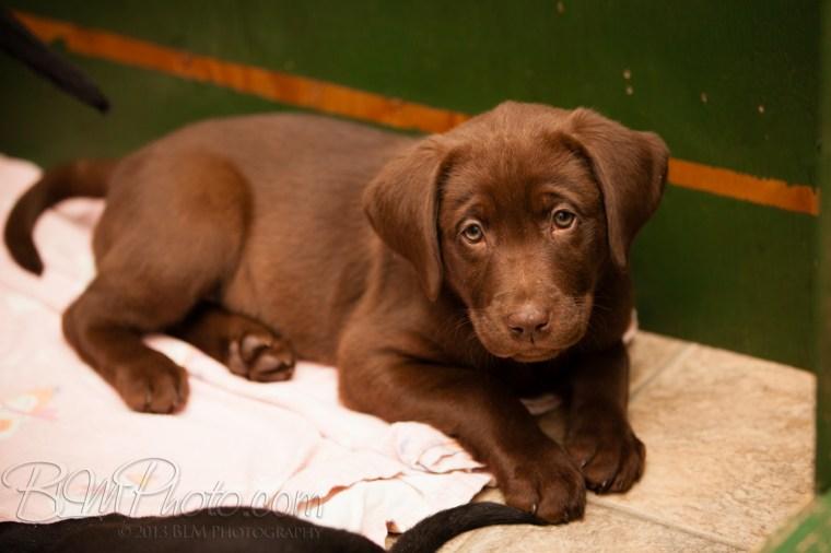 Webber-Dogs-5344