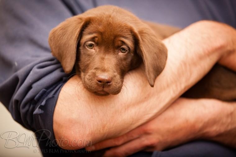 Webber-Dogs-5372