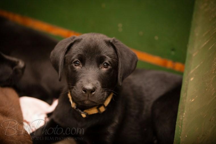 Webber-Dogs-5408