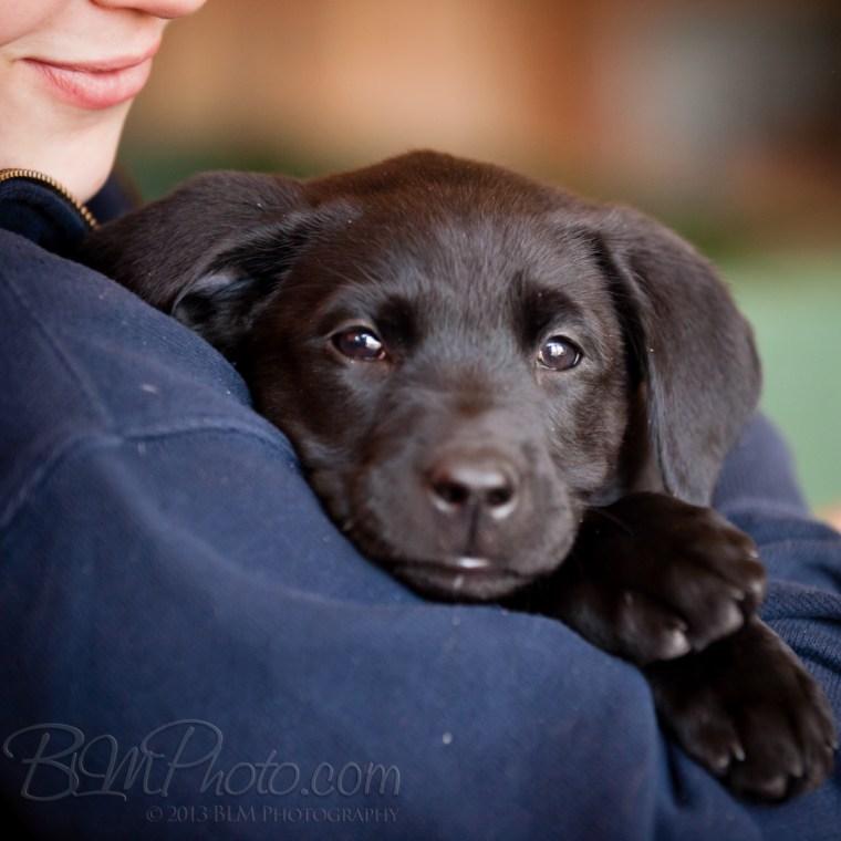 Webber-Dogs-5429