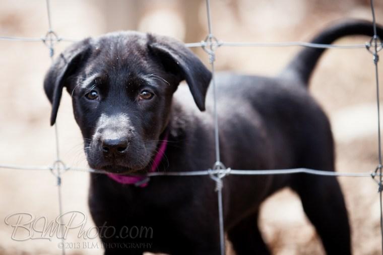 Webber-Dogs-5580
