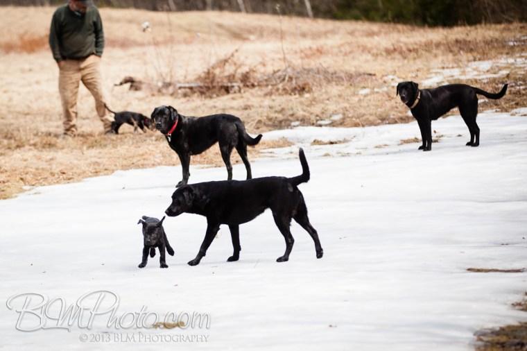 Webber-Dogs-5609