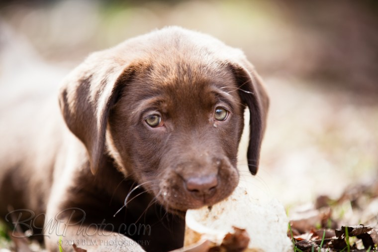 Webber-Dogs-5819