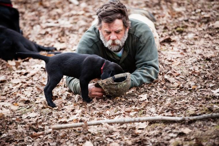Webber-Dogs-5923